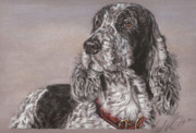 Canine Pastels - Johnny by Terry Kirkland Cook