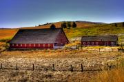 Johnson Road Barns Print by David Patterson