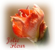 Flowering Bulbs Prints - Jolie Fleur Print by Kathy Bucari