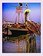 Boats At Dock Prints - Jolly Rover with pelican Print by John Breen
