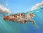 Green Sea Turtle Pastels - Jonah by Deb LaFogg-Docherty