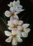 Jonquils Originals - Jonquils from Ann Jones by Joseph Baker