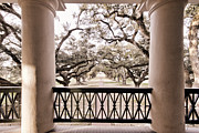 Mississippi River Originals - Josephines View of Oak Alley Plantation by Tim Ganier