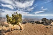 Empire Photo Originals - Joshua Tree 39 by Jessica Velasco