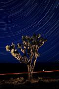 Joshua Tree Prints - Joshua Tree And Star Trails Print by Steve Gadomski