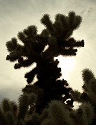 Aurica Voss Posters - Joshua Tree Poster by Aurica Voss