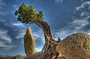 Lone Pine Prints - Joshua Tree Sentinals Print by Bob Christopher
