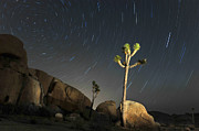 Tree Framed Prints - Joshua Tree Star Trails Framed Print by Dung Ma