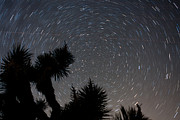 Up201209 Photos - Joshua Tree Star Trails One by Josh Whalen