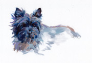 Pet Art Photo Framed Prints - Josie Framed Print by Kimberly Santini