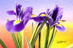 Anthony Caruso Framed Prints - Joy of Flowers Framed Print by Anthony Caruso