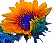 Sunflowers Digital Art - Joyful by Gwyn Newcombe