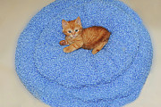 Jpeg Photo Prints - Jpeg on his blue bed Print by Rianna Stackhouse