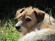 K9 Greeting Cards Photos - Jrt by Ginger Wemett