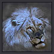 Wildlife Christian Art Framed Prints - Judah Framed Print by Donna Proctor