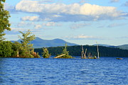 Wildlife Photography Posters - July Peace in New Hampshire on Lake Umbagog Poster by Neal  Eslinger