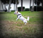 Dog Park Prints - Jump Print by Mandy Shupp