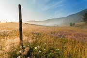 Dew Prints - June morning Print by Evgeni Dinev