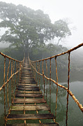Fog Metal Prints - Jungle Journey 2 Metal Print by Skip Nall