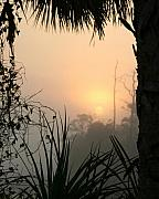 Landscape Prints Prints - Jungle Morning Print by LaMarre Labadie