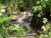 Rainforest Art - Jungle River of Costa Rica by William Patterson