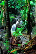 Verdant Prints - Jungle waterfall Print by Thomas R Fletcher