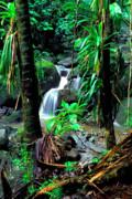 Jungle Waterfall Print by Thomas R Fletcher
