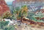 Canyon Painting Originals - Juniper in Canyon de Chelly by Donald Maier