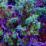 Ann Johndro-Collins - Juniper Neurons