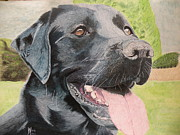 Alan Webb - Just a Black Labrador