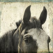 The Horse Digital Art Metal Prints - Just A Horse Metal Print by Gothicolors And Crows
