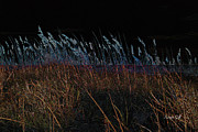 Sea Oats Digital Art Prints - Just Around Midnight Print by Suzanne Gaff
