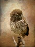 Owl Print Prints - Just Awake Print by Perry Van Munster