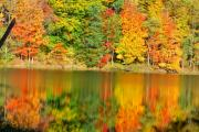 Fall Scenes Metal Prints - Just Beauty Metal Print by Emily Stauring