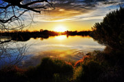Arizona Sunset Photos - Just Beyond the Trees by Saija  Lehtonen