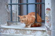Windowsill Art - Just curious cat by Heiko Koehrer-Wagner
