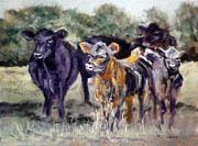 Black Angus Prints - Just Curious Print by J P Childress