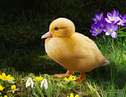 Easter Flowers Digital Art Posters - Just Ducky Poster by Bob Nolin