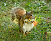 Squirrel Photos - Just for you... by Alex Hardie