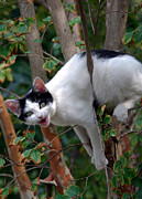 Black Cat Photos Photos - Just Hangin Out by Skip Willits