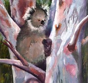 Koala Pastels Posters - Just Hanging About Poster by Nadine Kelly