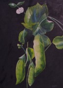 Vine Paintings - Just hanging around by Dana Redfern