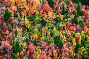 Fall Photo Prints - Just in Time Print by Chad Dutson