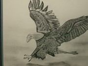 Eagle Drawing Drawings Originals - Just Landing by LInda Stephenson