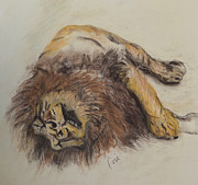 Lion Pastels - Just Lion Around by Cori Solomon