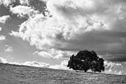 Big Sky Framed Prints - Just One Tree - Black and White Framed Print by Peter Tellone