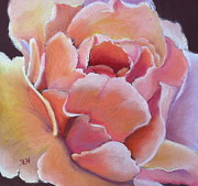 Close Up Floral Pastels Posters - Just Peachy Poster by Helen Hammerman
