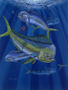 Striped Marlin Prints - Just Taken Print by Carey Chen