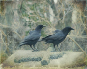 Corvus Brachyrhynchos Prints - Just The Two Of Us Print by Gothicolors And Crows