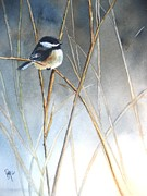 Chickadee Framed Prints - Just Thinking Framed Print by Patricia Pushaw